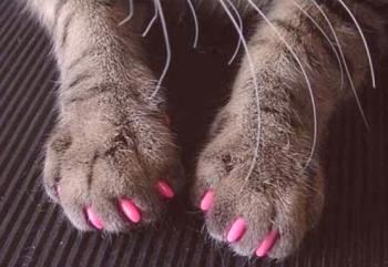 způsoby, jak udržet vaše kočička pevně